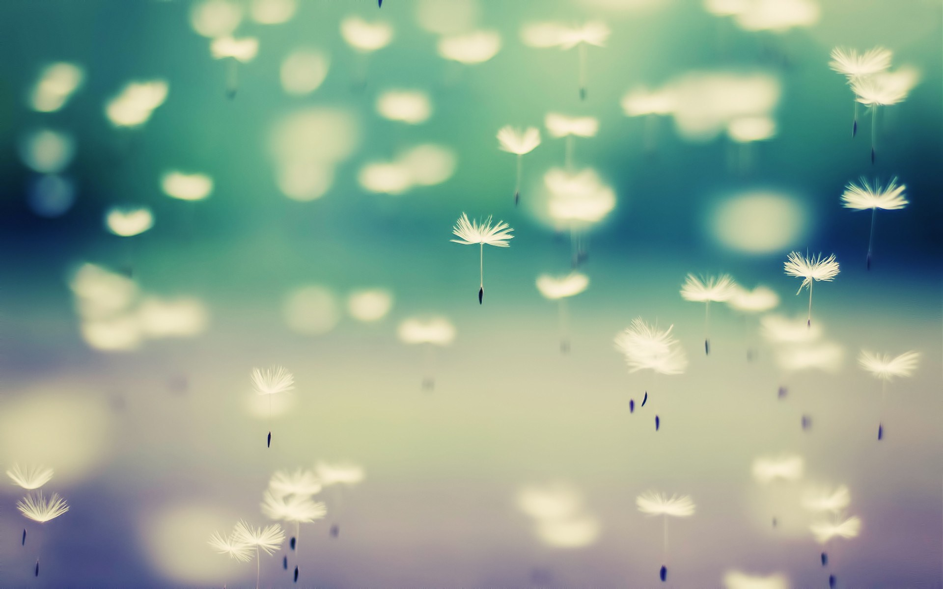 Dandelion WallpapersHD Wallpapers