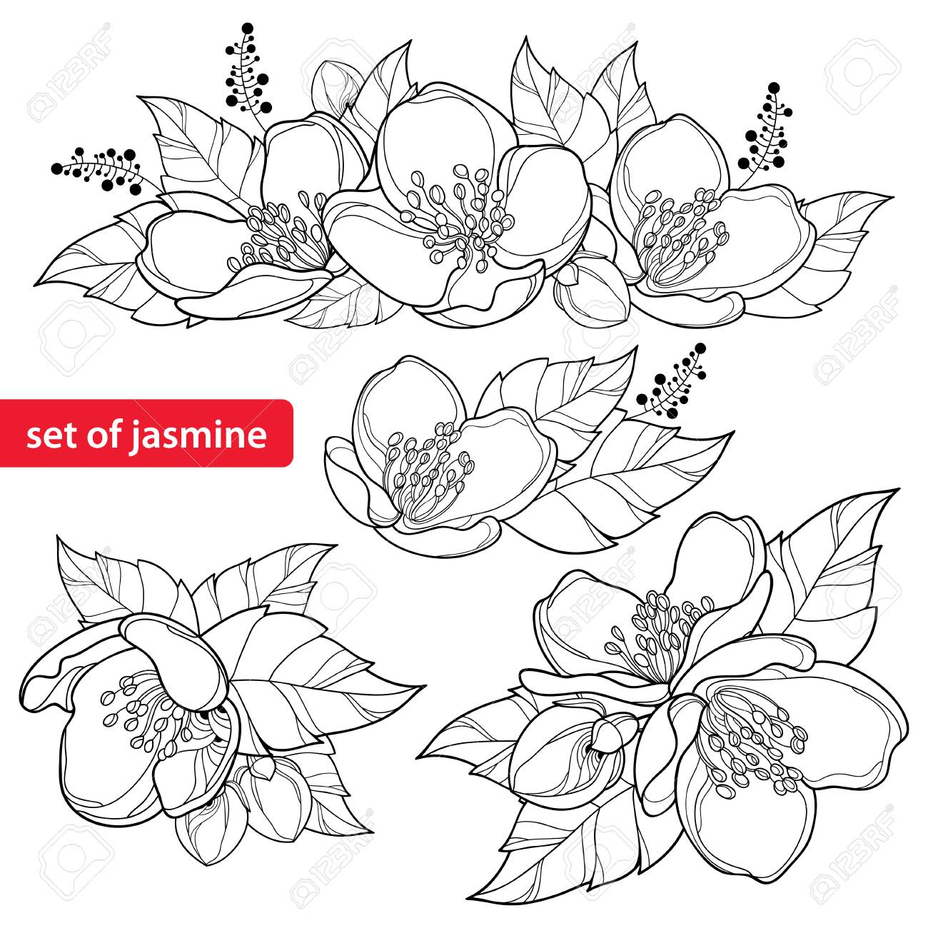 Set With Outline Jasmine Flower Bunch Bud And Ornate Leaves 1300x1300