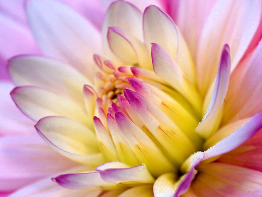 Beautiful Flower Wallpaper Blogging Tips Social Media TipsSEO Tips 1024x768