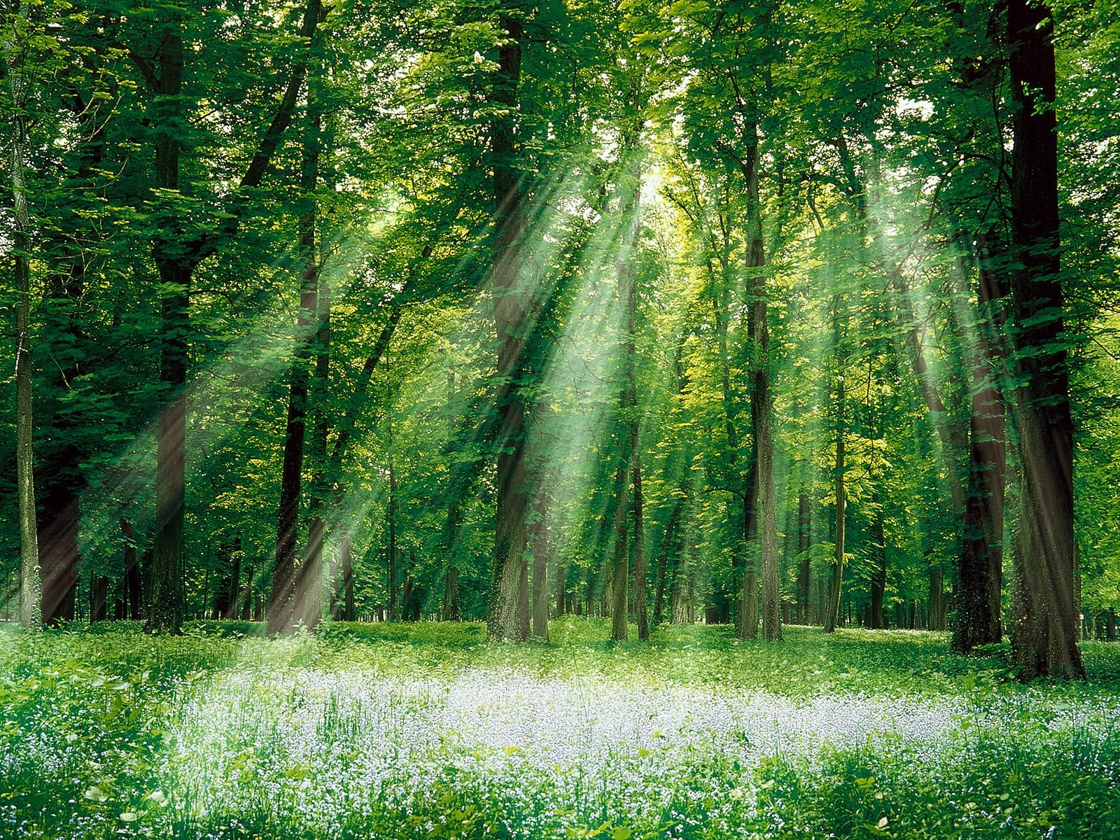 Nature Green Forest and White Sun Light wallpaper | Download Nature ...