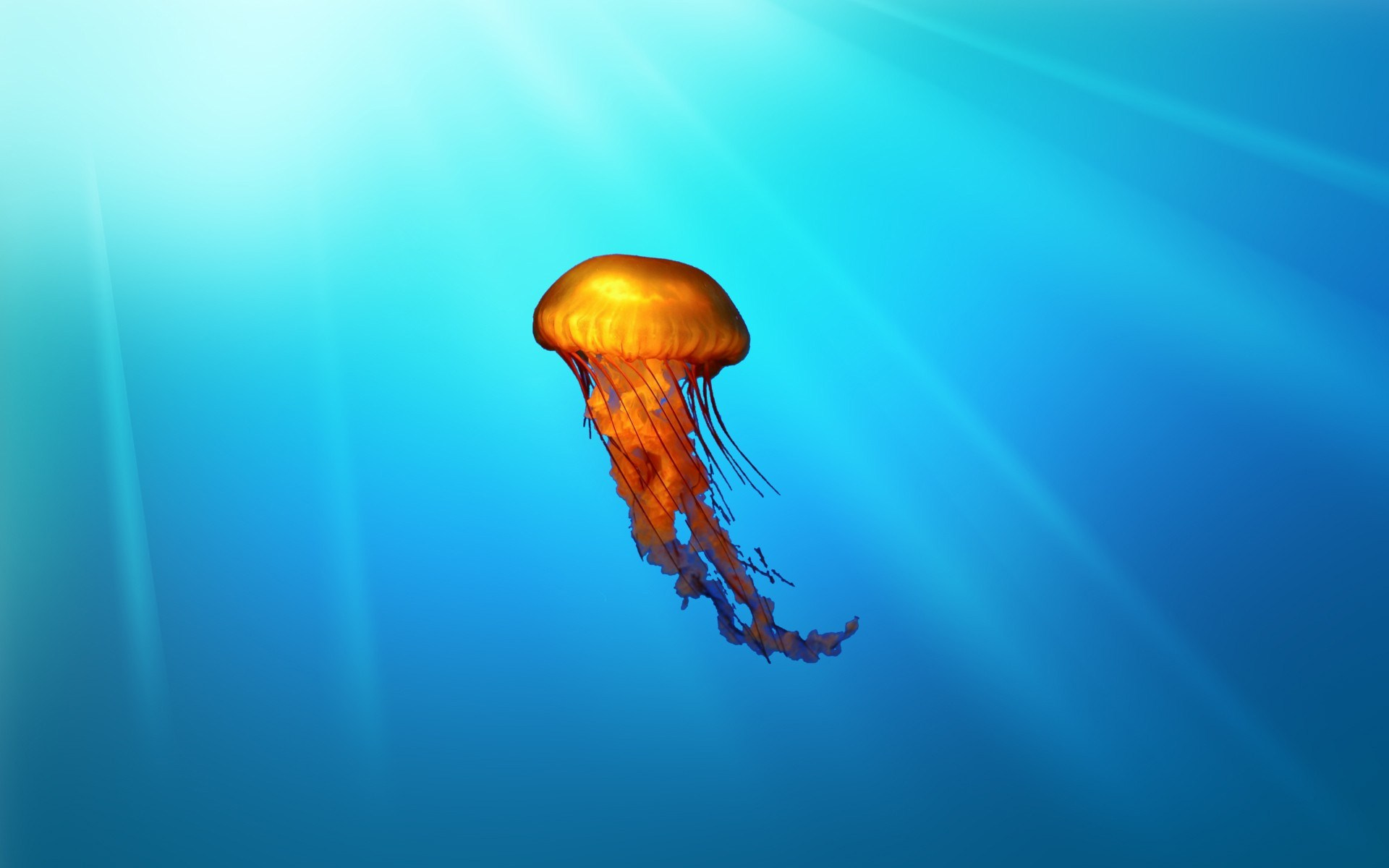 Jellyfish wallpapers hd wallpapersafari - Jellyfish hd images ...