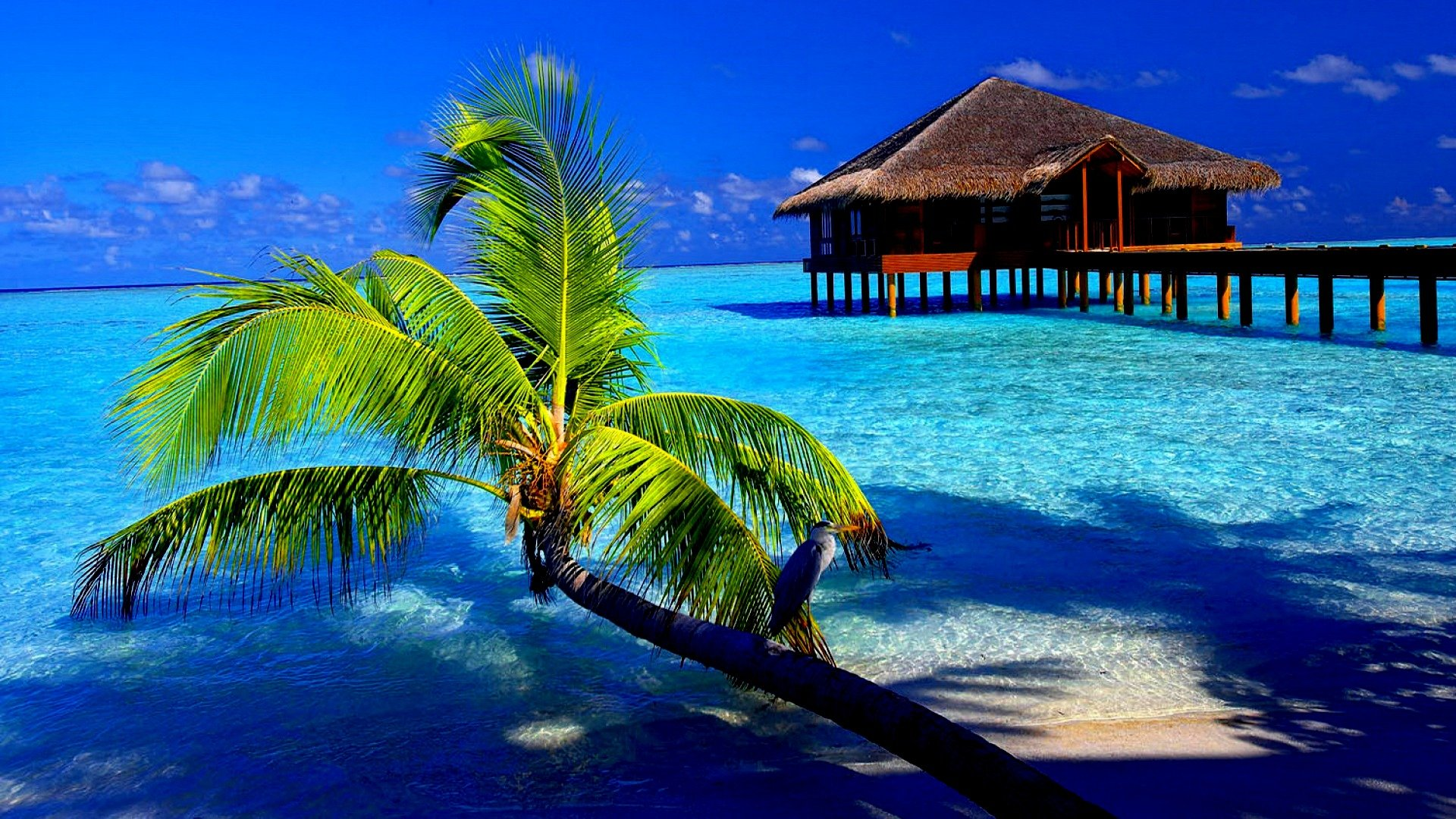 Tropical island desktop wallpaper wallpapersafari - Nature background pictures for computer ...