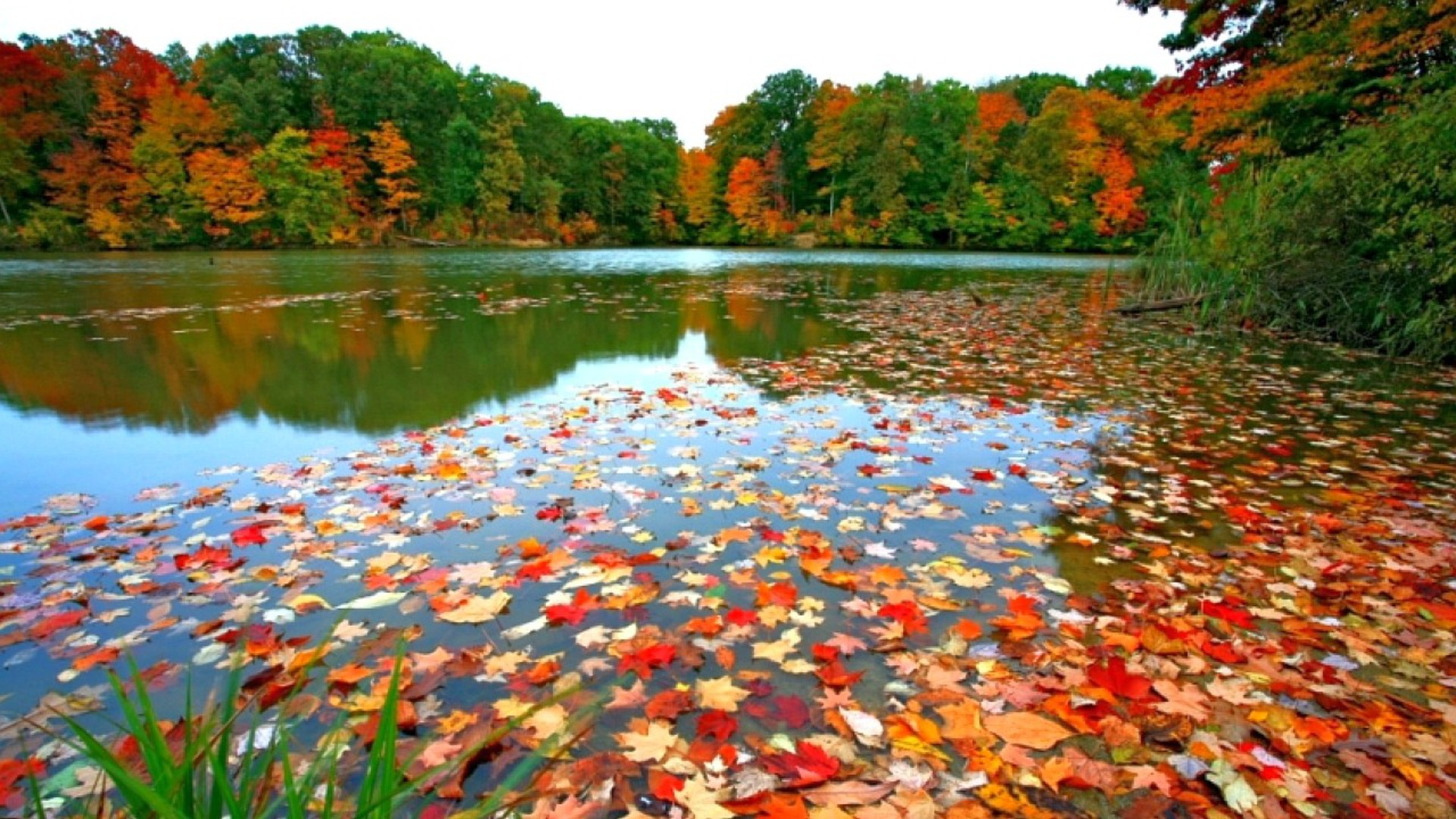 Fall Leaves Background Wallpapers WIN10 THEMES 1920x1080