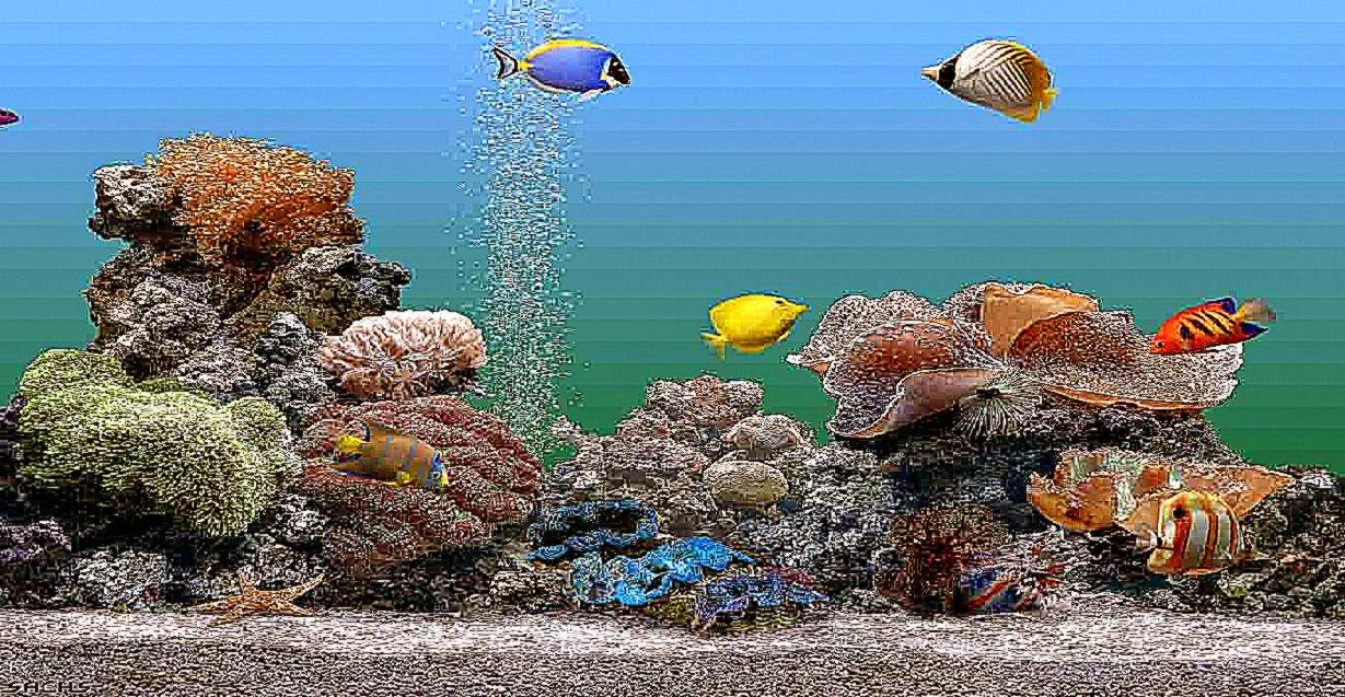 50 aquarium wallpapers for windows 8 on wallpapersafari - Anime screensaver windows 10 ...