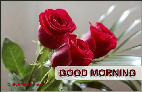 GOOD MORNING Quotes Red Rose Facebook Status Wallpapers Images Pics 500x325