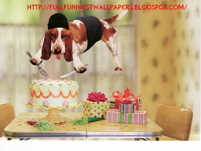 Funny Happy Birthday 37 Widescreen Wallpaper   Hivewallpapercom 640x480