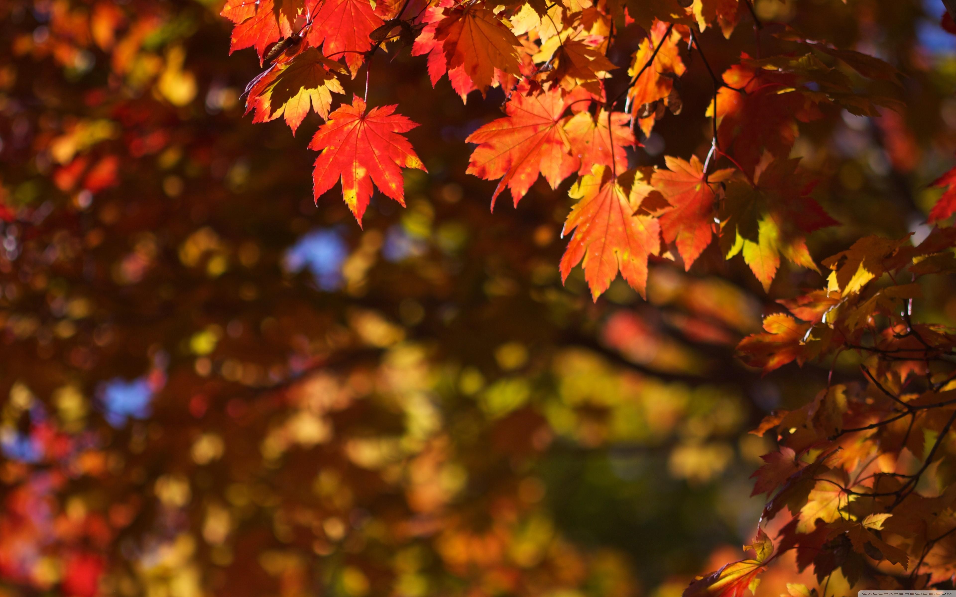 October - HD3840×2400