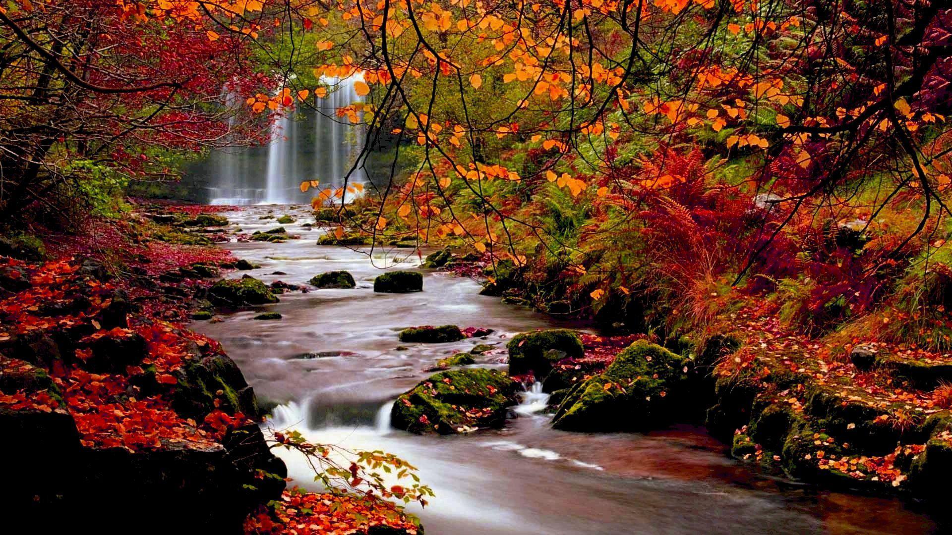 Autumn Trees Nature Landscape Leaf Leaves Desktop 1920x1080