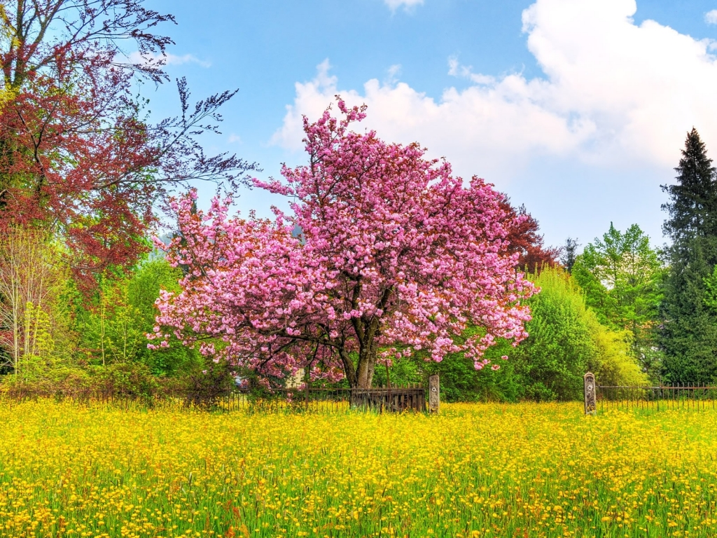Spring Desktop Wallpaper Downloads 1024x768