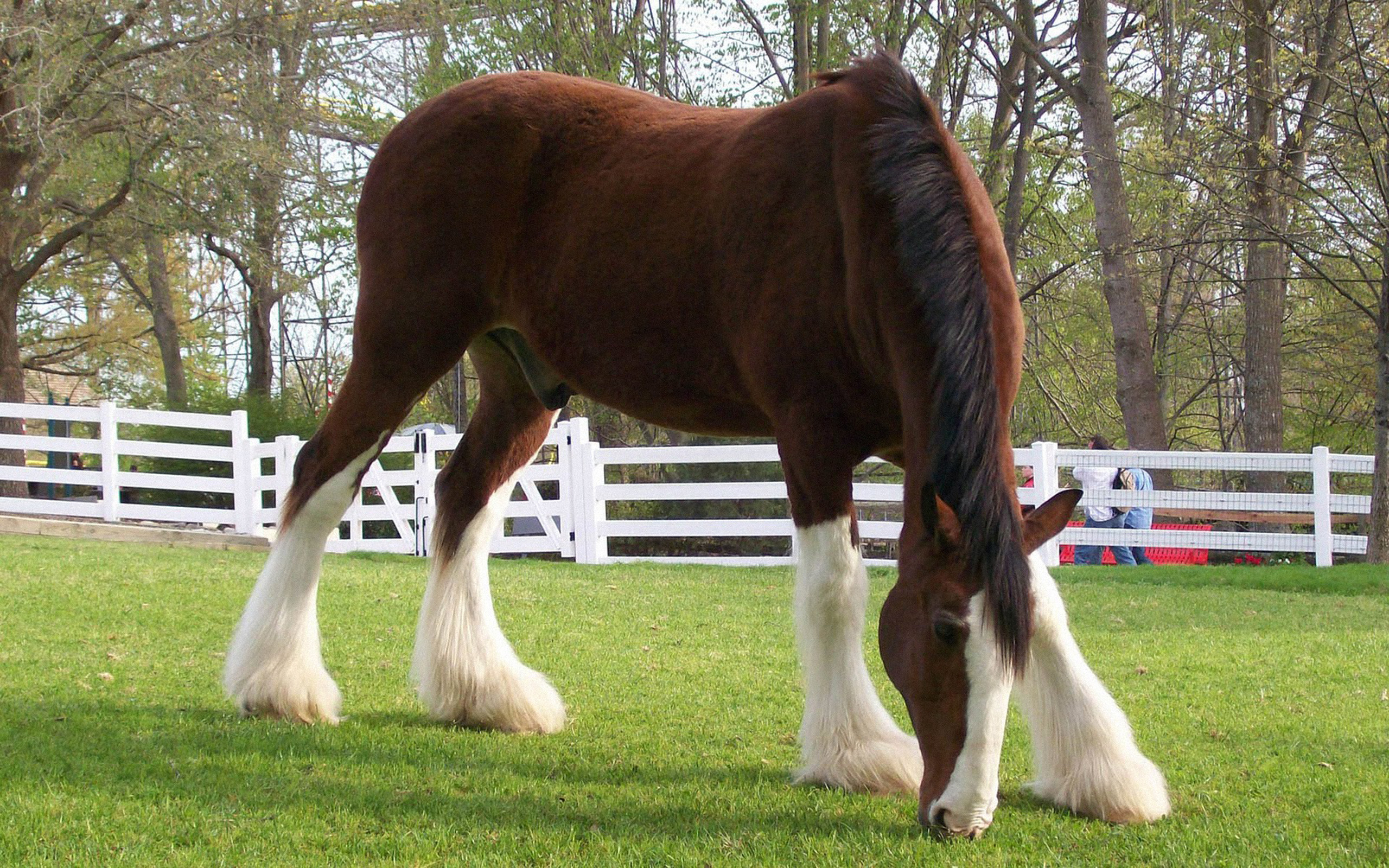 Horse Wallpapers 2560x1600