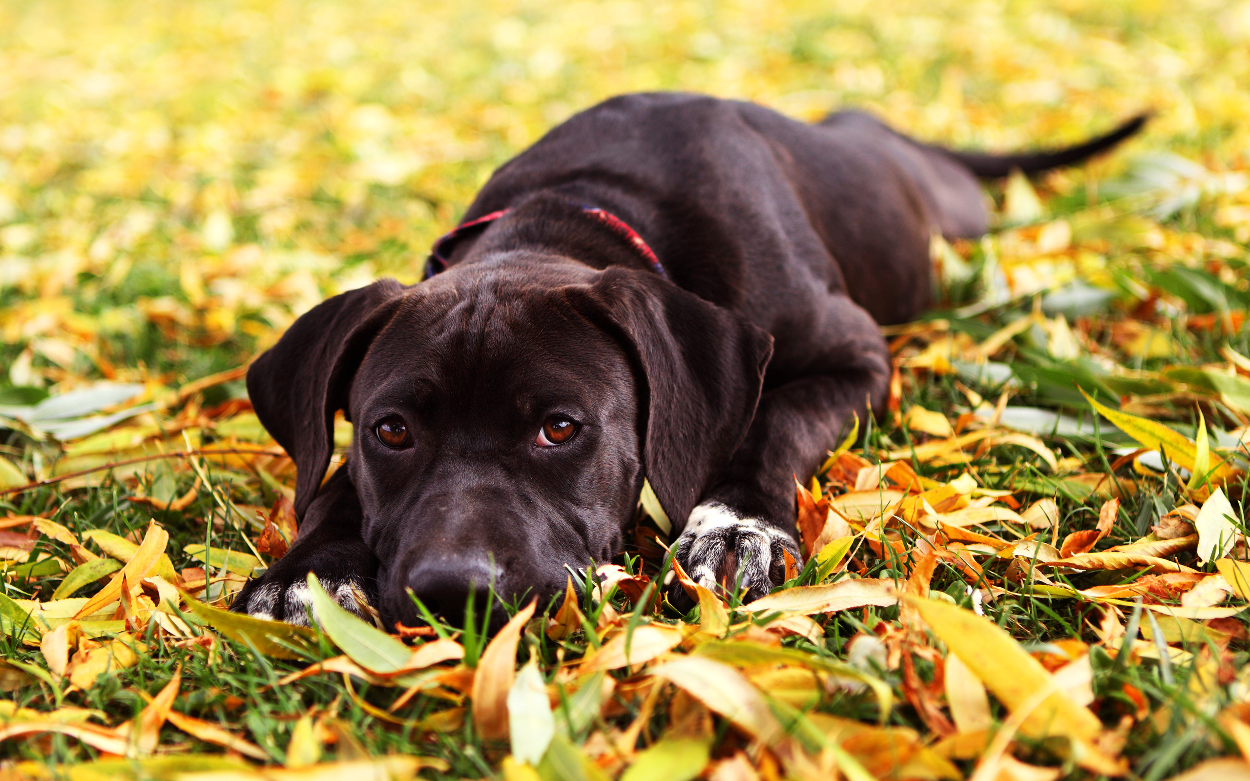 Fall Wallpaper With Dogs Images Pictures   Becuo 2560x1600