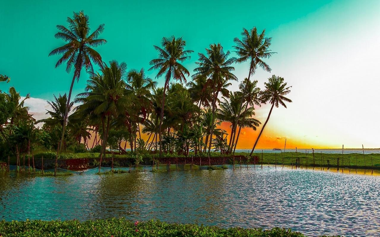 Beautiful palm trees Widescreen Wallpaper   12932 1280x800