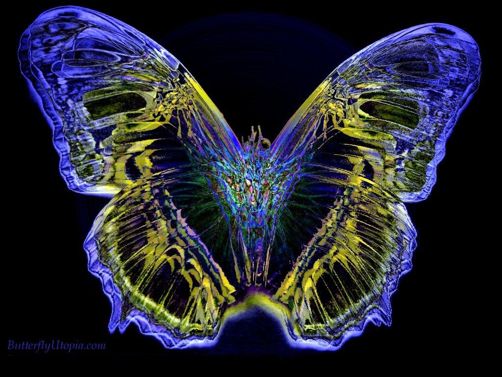 Neon Butterfly Desktop Background: Butterfly Desktop Backgrounds Wallpapers
