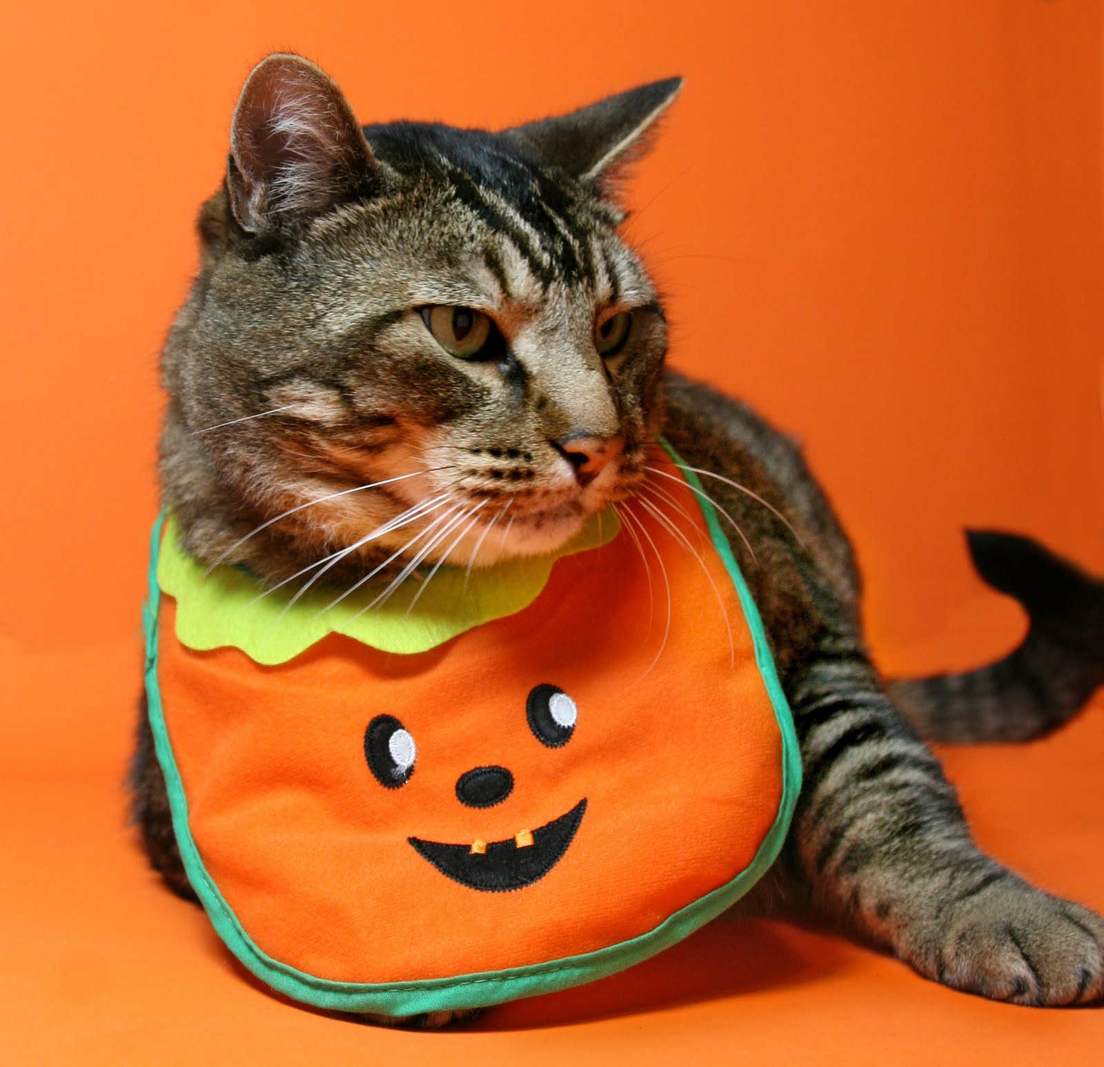 Happy Halloween Cat Countrysoldierorg Best Wallpapers 800x600 View 0 HAVE YOO EVER SEENED A MORE IMPRESSIV AND MANLY PUNKIN 1600x1547