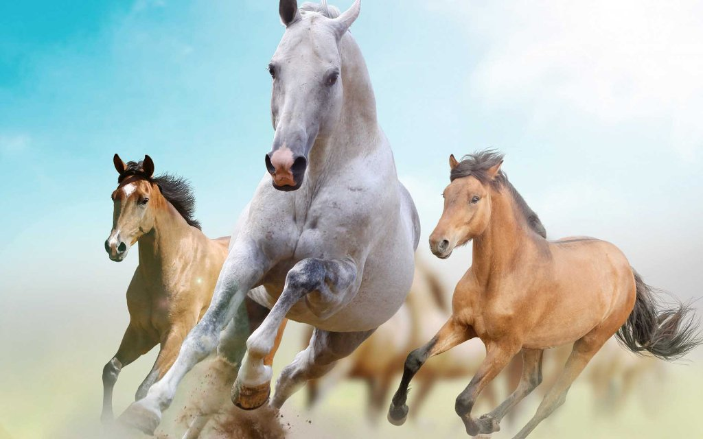 horse racing   wallpaper horse racing wallpaper screensaver  photos 1024x640