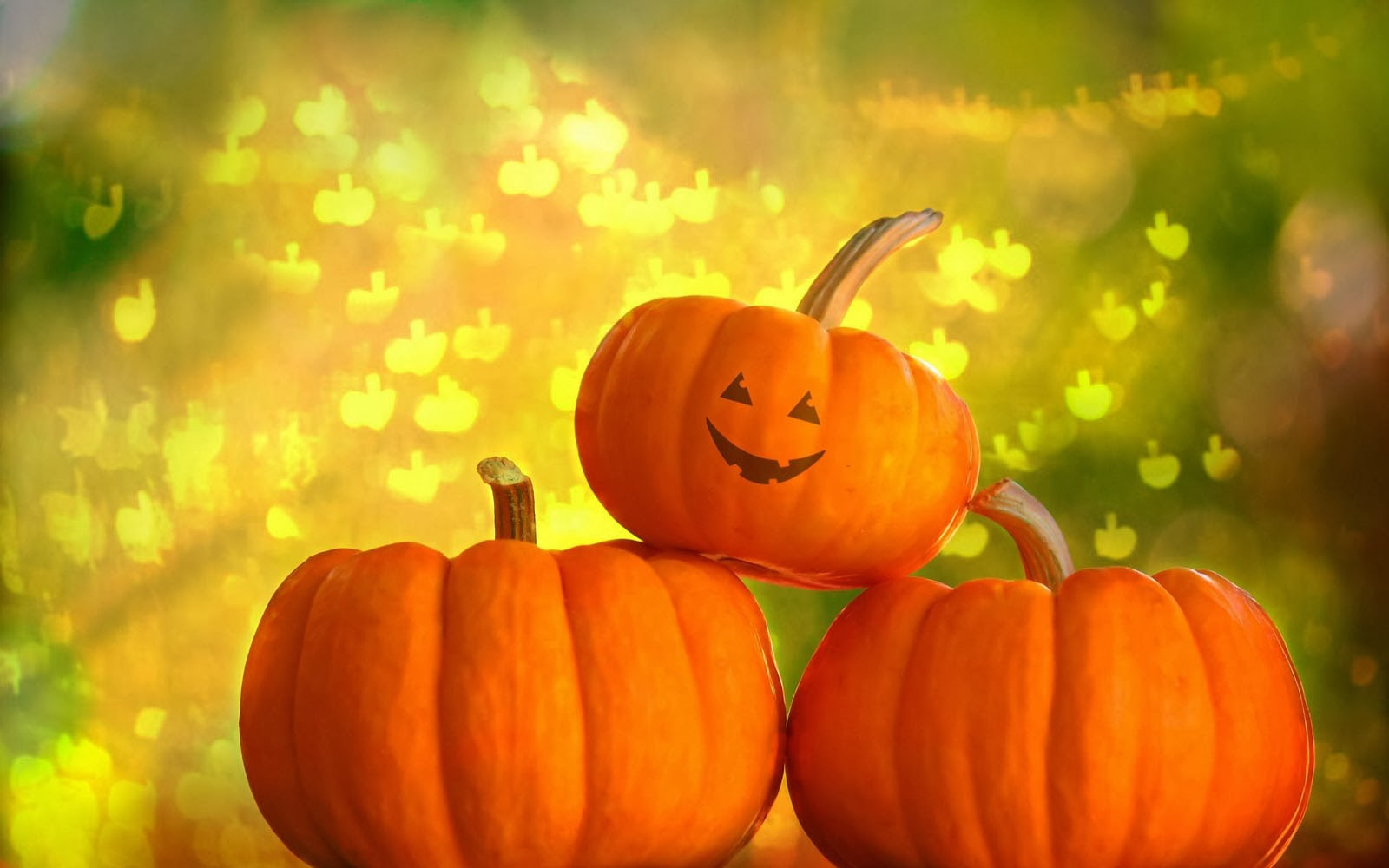 Tag Pumpkin Wallpapers Backgrounds Photos Images andPictures for 1600x1000