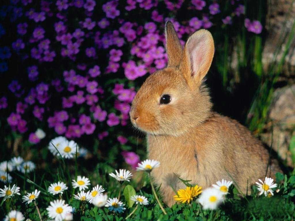 FunMozar Spring Animal Wallpapers 1024x768
