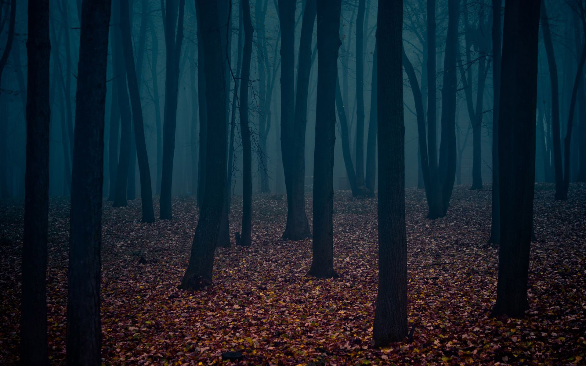 Dark Forest The Art Mad Wallpapers 1920x1200