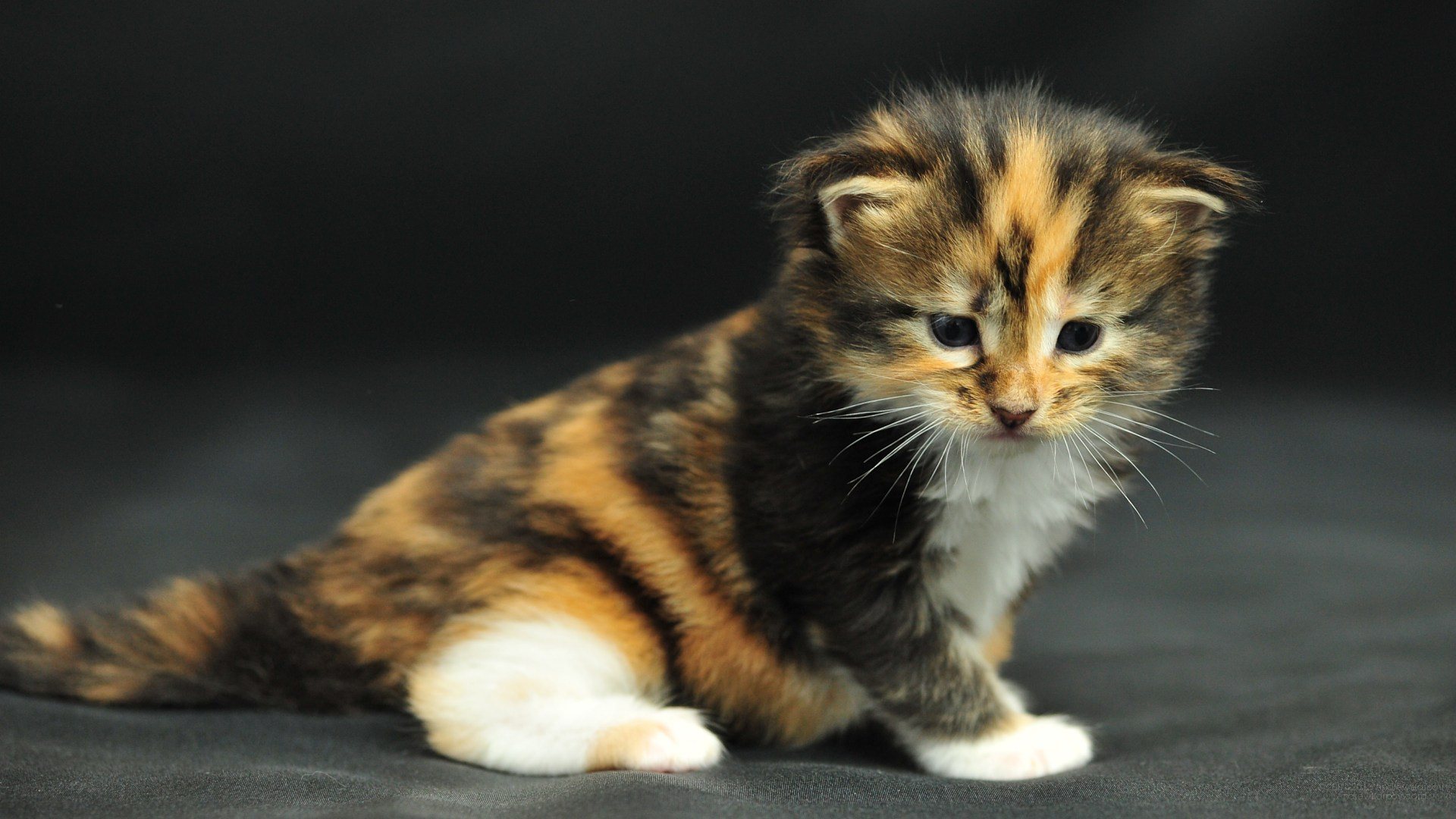 image wallpaper 1920 1080 Funny Cat Origami Maine Coon kitten LOL cats 1920x1080