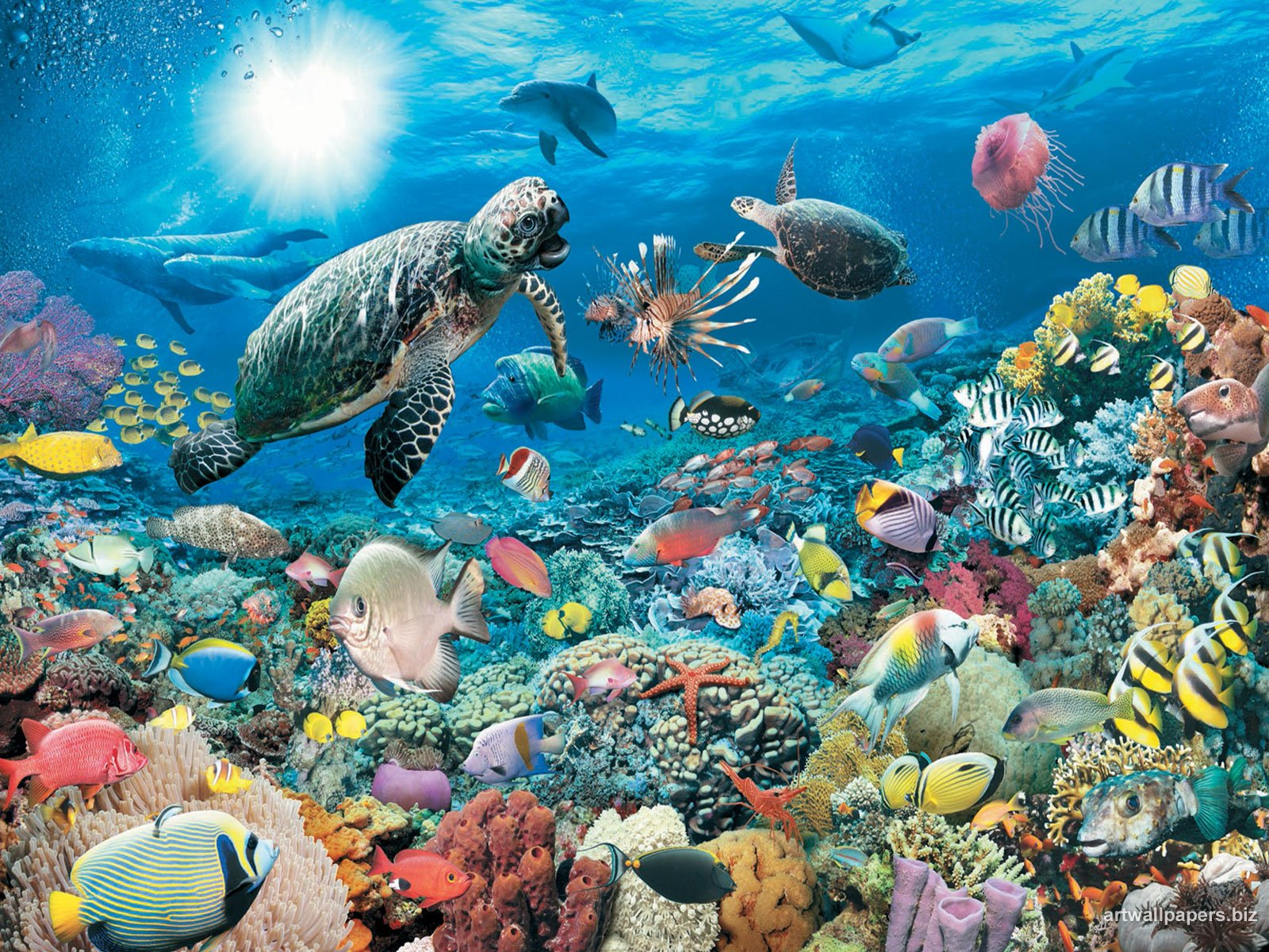 underwater cartoon wallpaper - photo #24