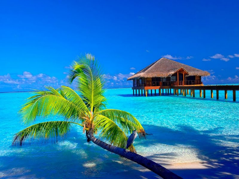 Hd Tropical Island Beach Paradise Wallpapers And Backgrounds: High Def Tropical Wallpaper