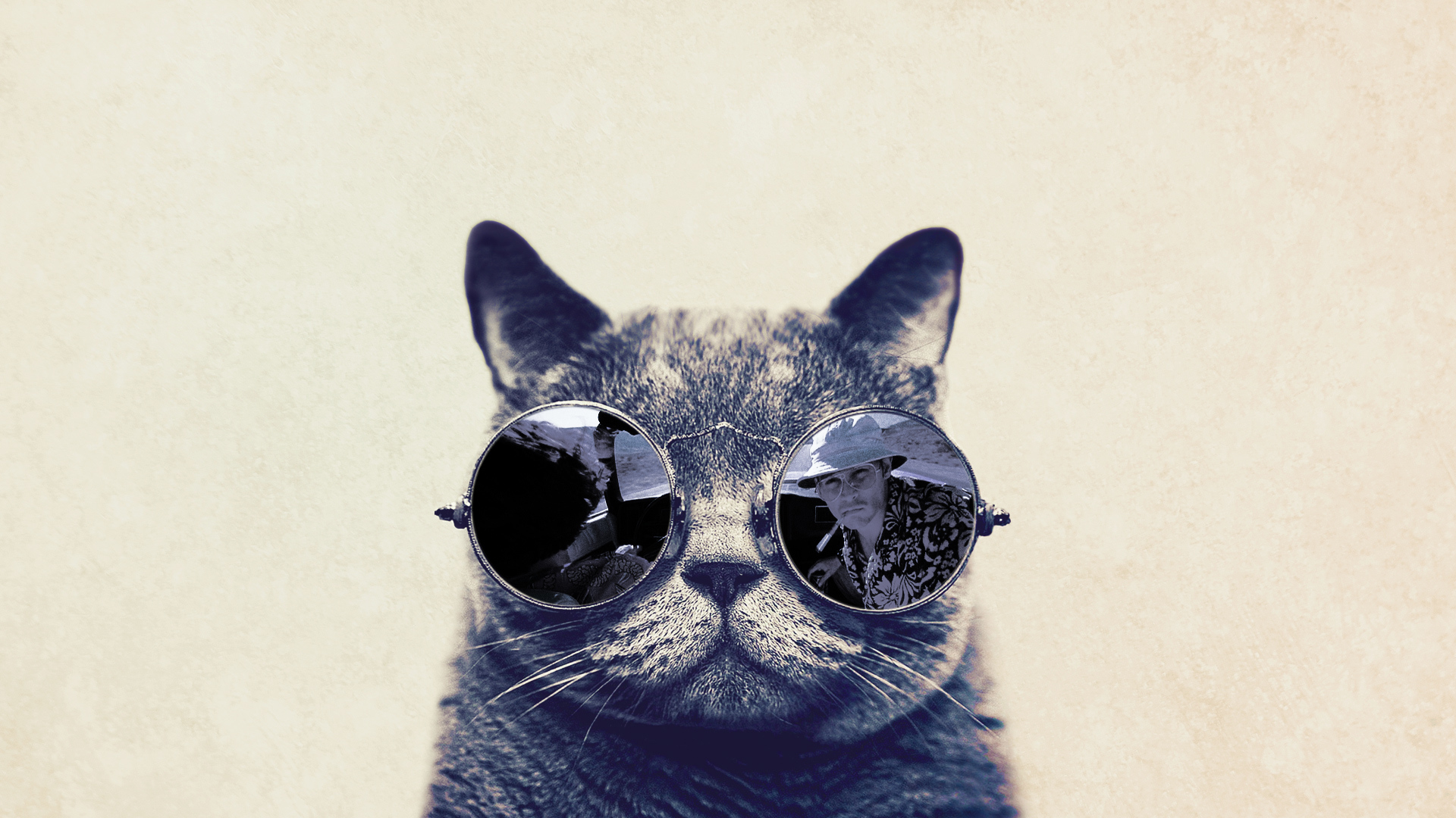 Cat with glasses Fear in Vegas wallpapers and images   wallpapers 1920x1080