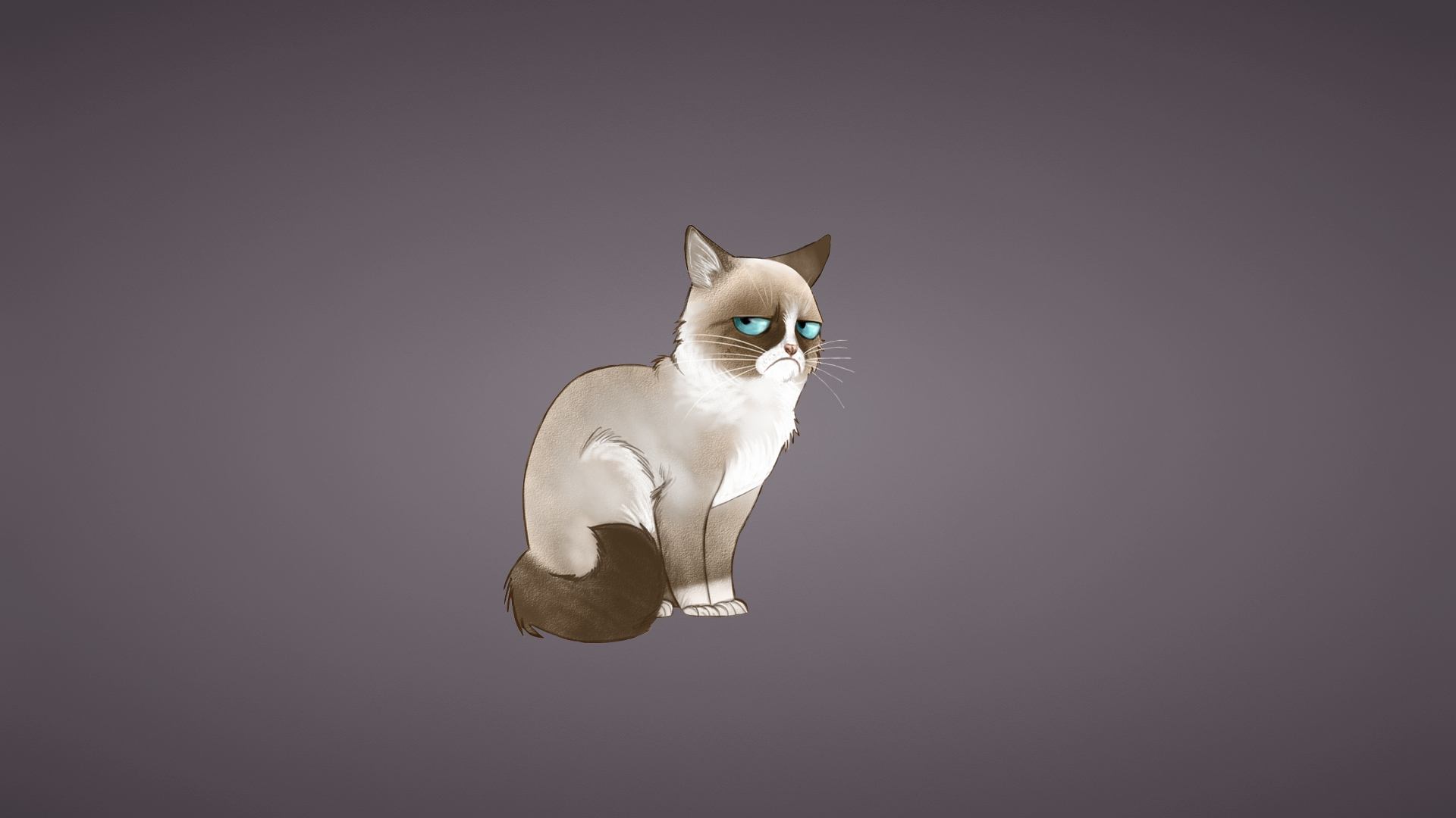 Wallpaper 1920x1080 Grumpy cat Meme Cat Full HD 1080p HD Background 1920x1080