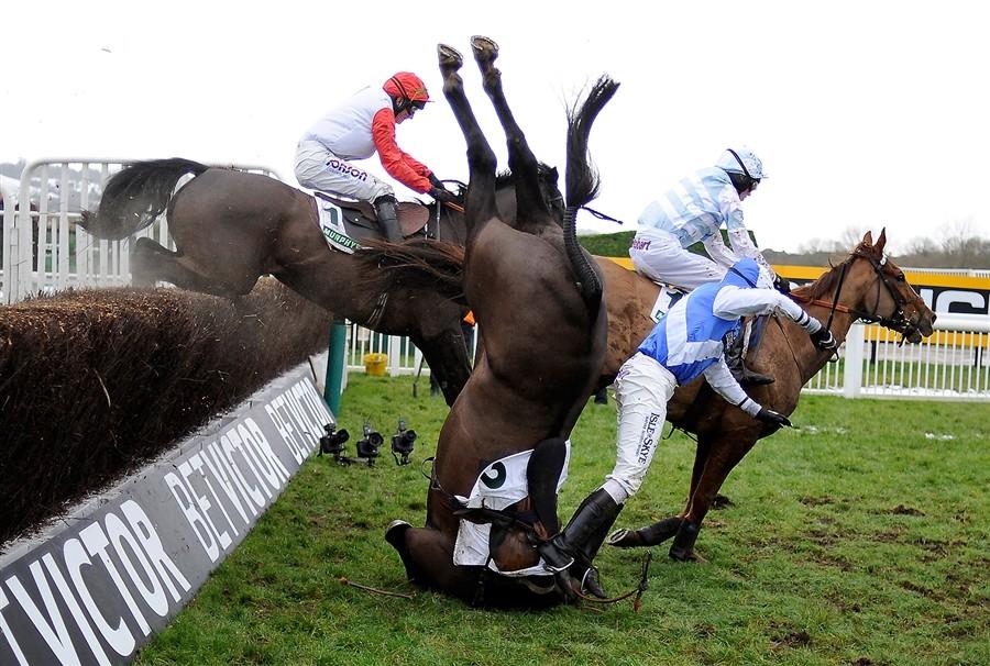 Cheltenham Festival Horses