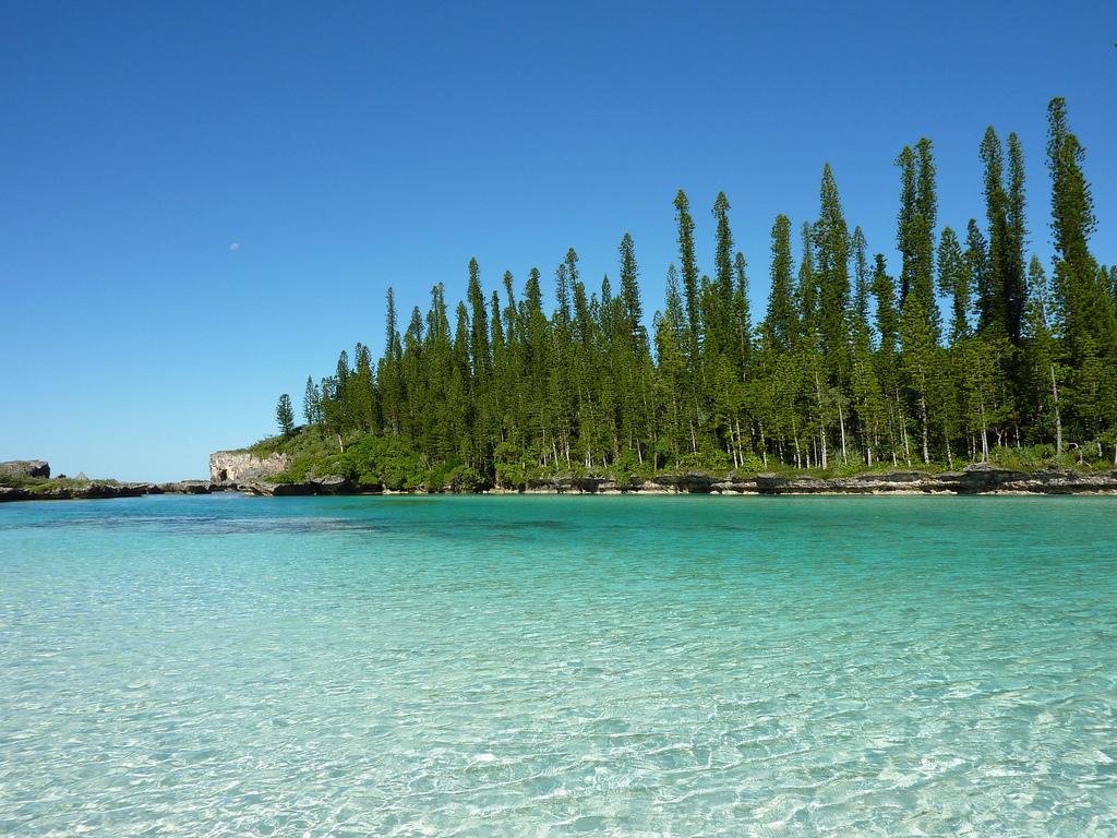 File0 Araucaria columnaris New Caledoniajpg   Wikimedia Commons 1024x768