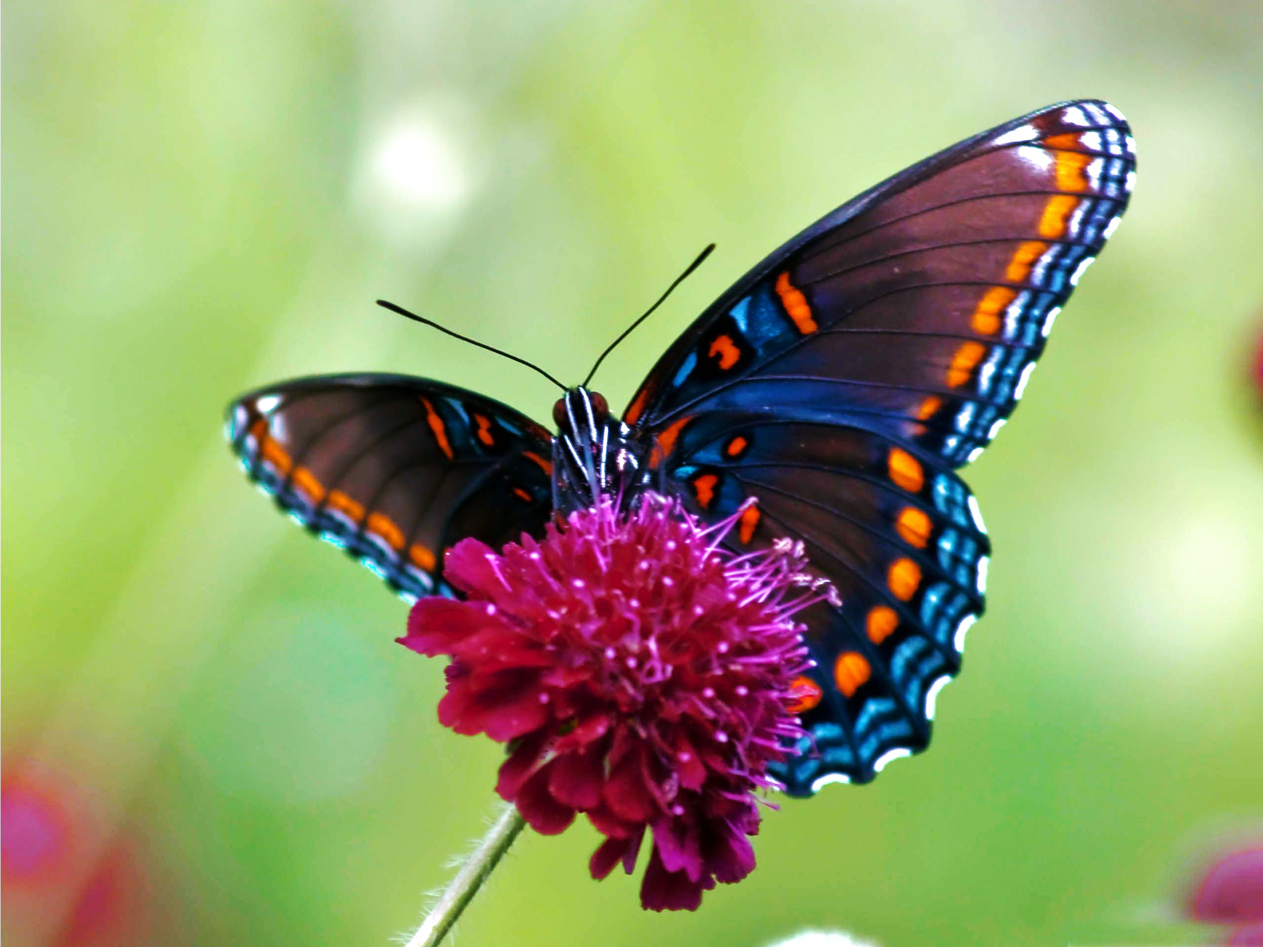 butterfly desktop wallpaper download colorful butterfly 2560x1920