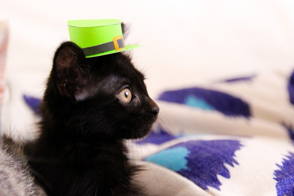 St Patricks Day Cat Wallpaper 82J4Q25 Picseriocom   Picseriocom 1024x683