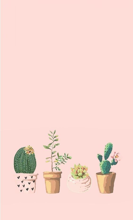 Pin by Orianna on art Pastel iphone wallpaper Succulents 562x928