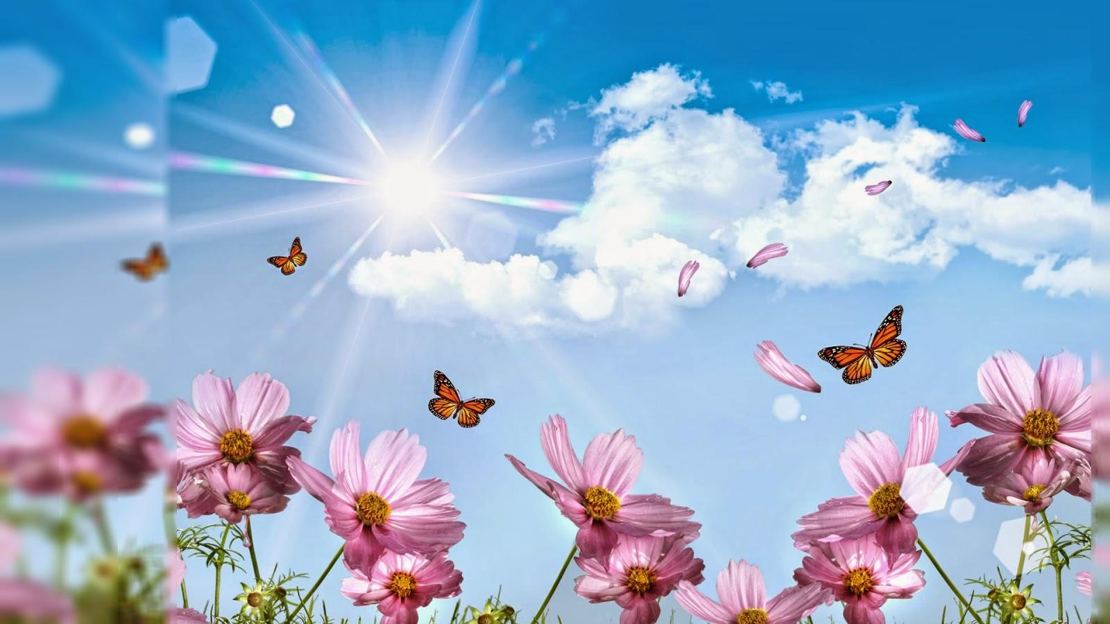 Random Lovely Flowers Wallpaper Desktop Background Full Screen 1600x900
