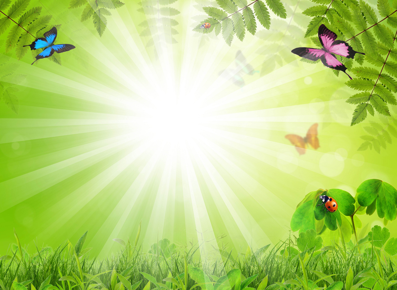 Fabulous Background With Insects Backgrounds For PowerPoint 1280x936