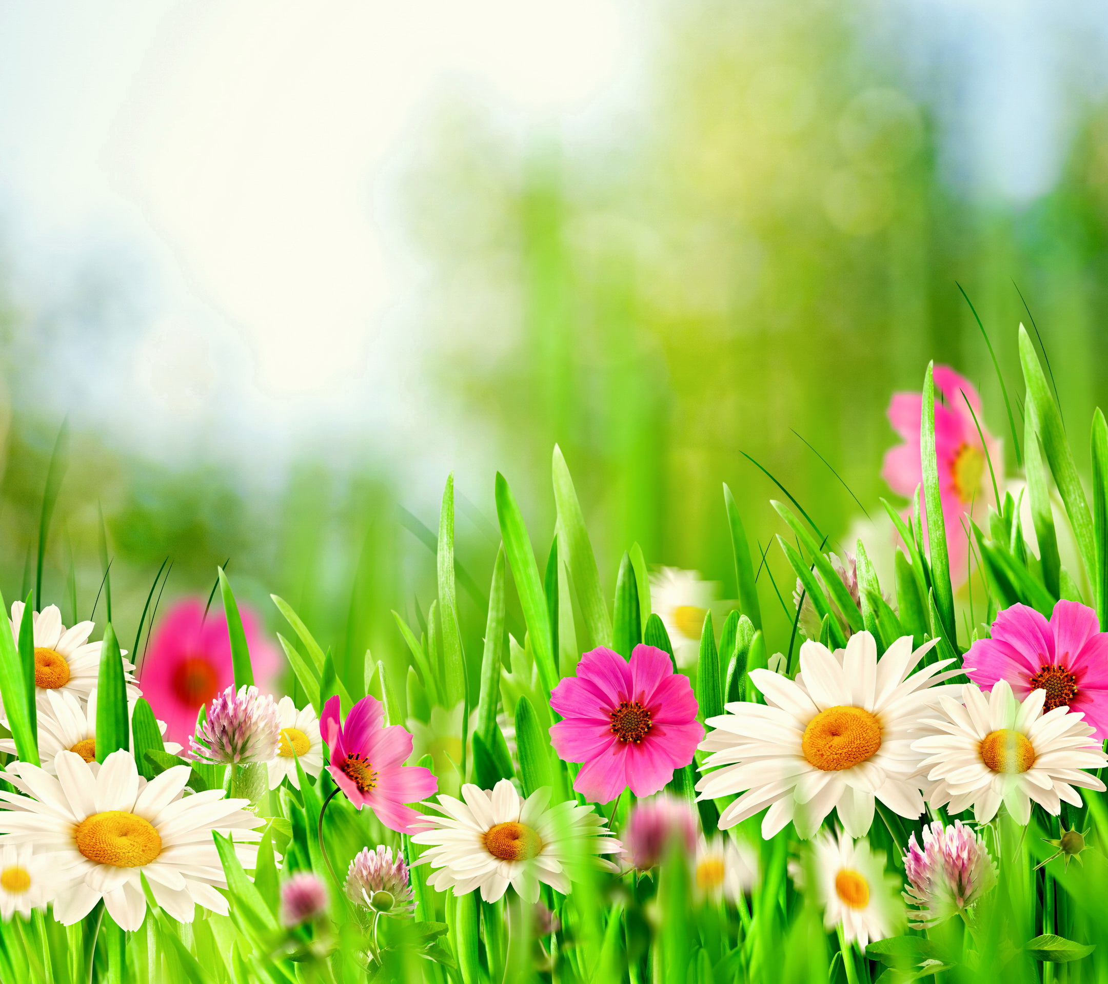 Spring Meadow HD HD Samsung Galaxy S5 Wallpapers free download 2160x1920