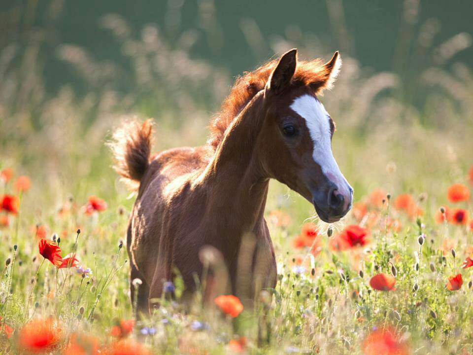 spring wild horse wallpaper - photo #4