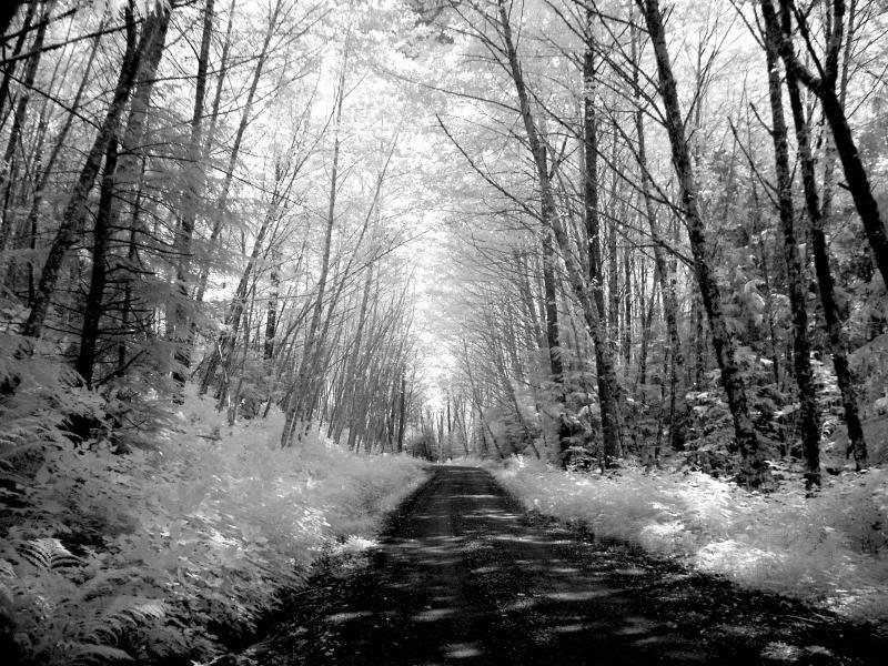 SNOWY FOREST ROAD WALLPAPER   61814   HD Wallpapers 800x600