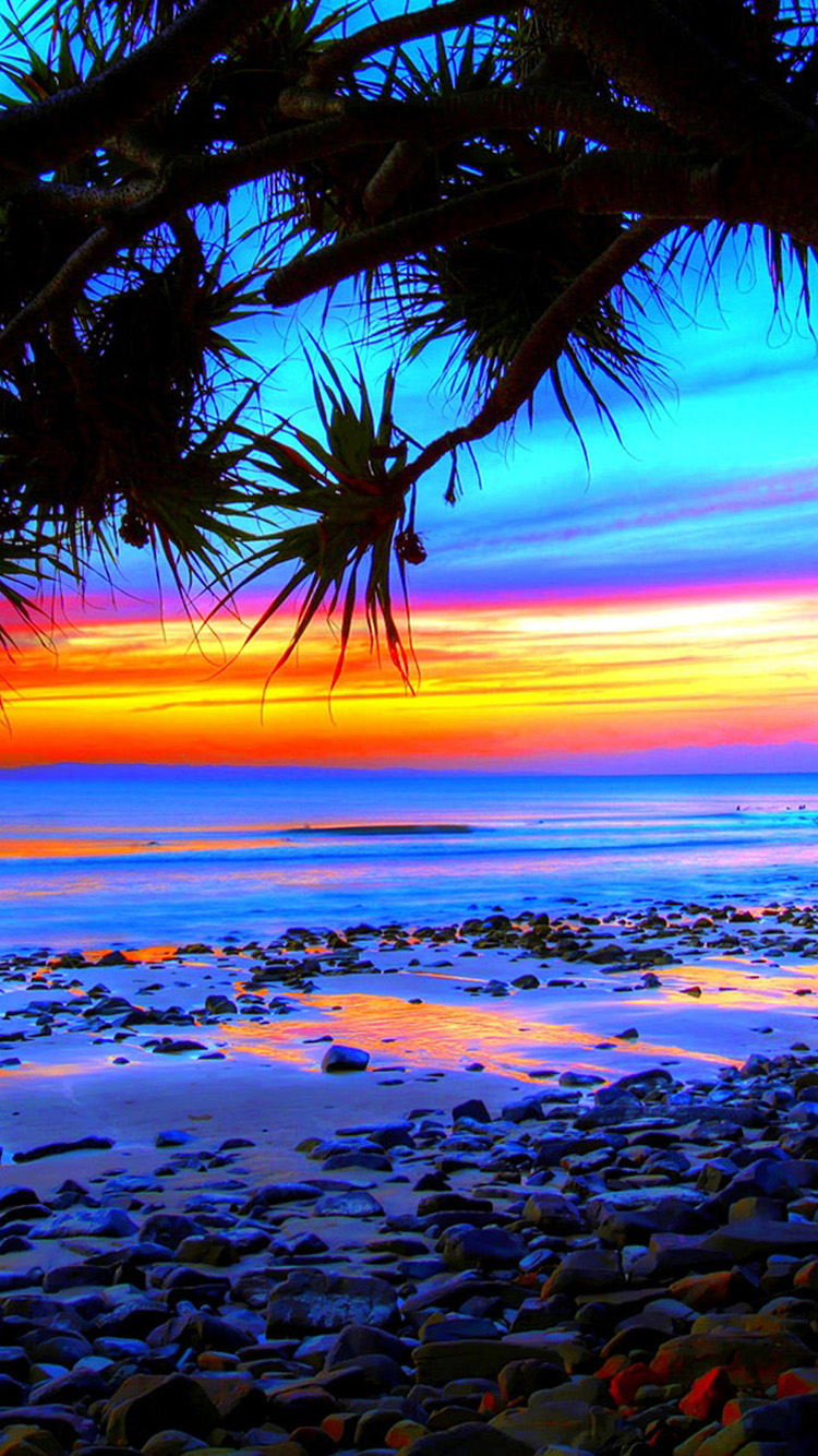 Wallpaper iphone tropical - Home Beach Tropical Beach Sunset And Tree Iphone 6 Wallpapers
