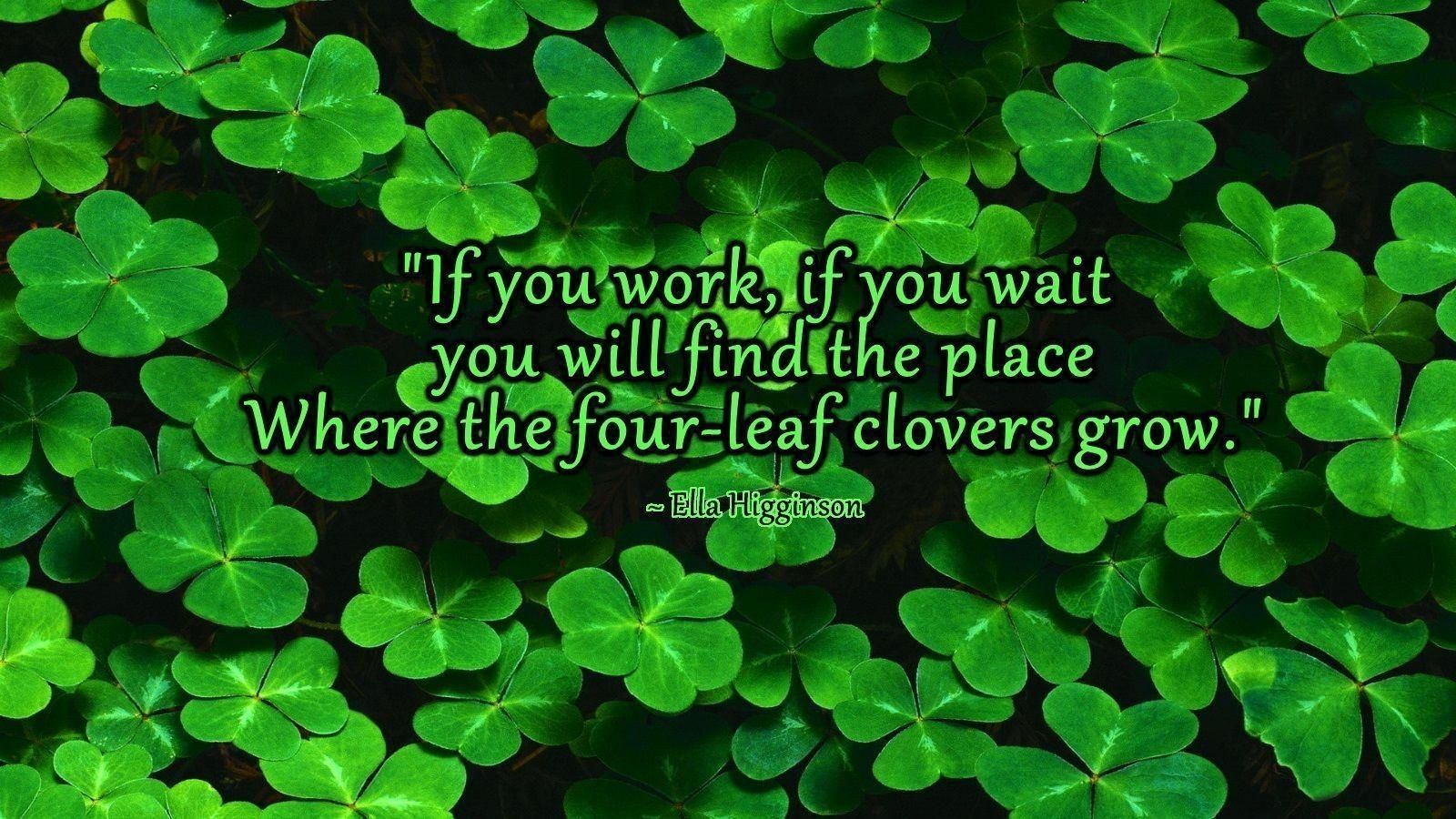 10 Most Popular 4 Leaf Clover Wallpaper FULL HD 1080p For PC 1600x900