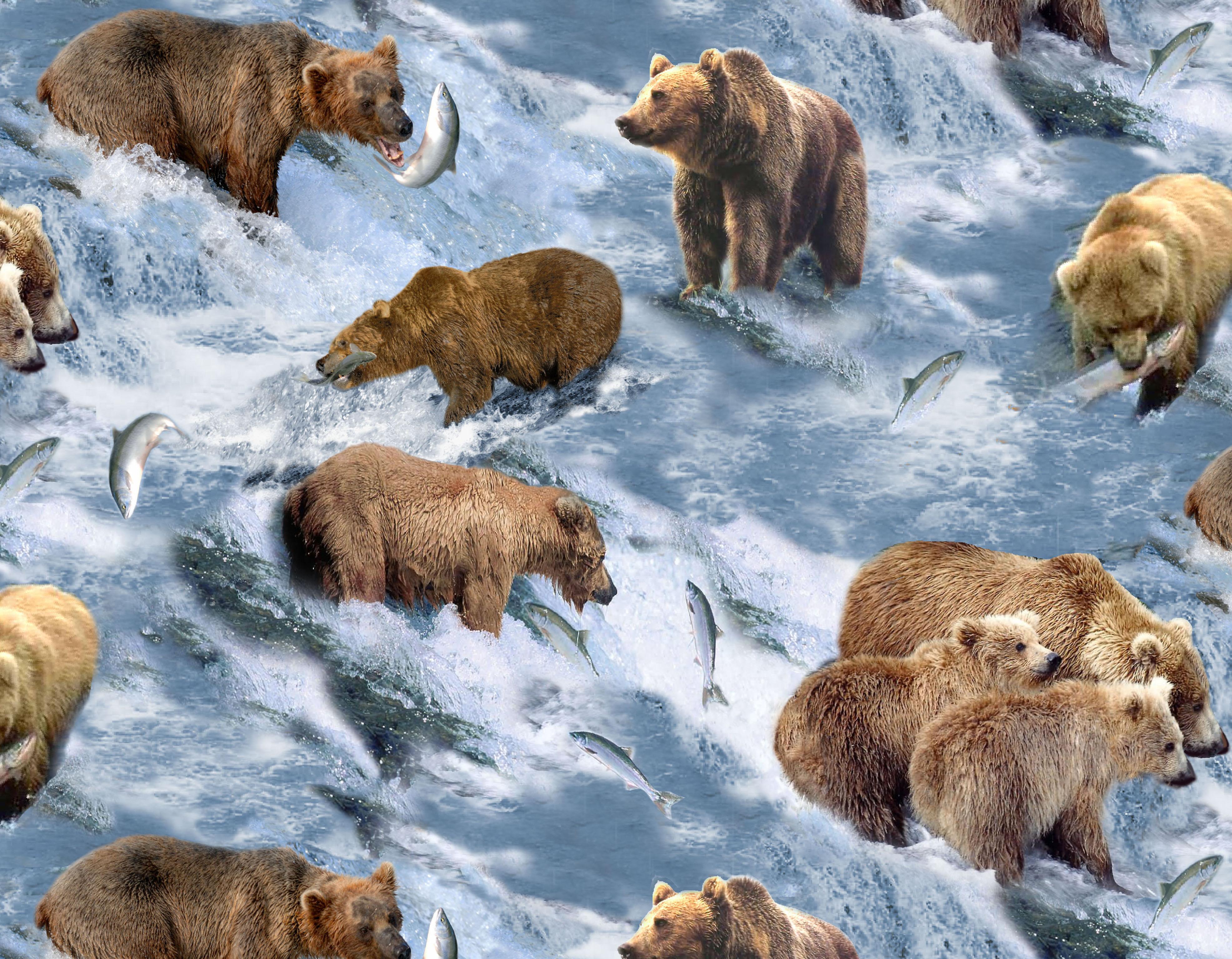 Bear river salmon fish it wallpaper 3944x3072 195847 WallpaperUP 3944x3072