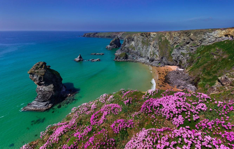 Wallpaper sea flowers rocks coast England England Cornwall 1332x850