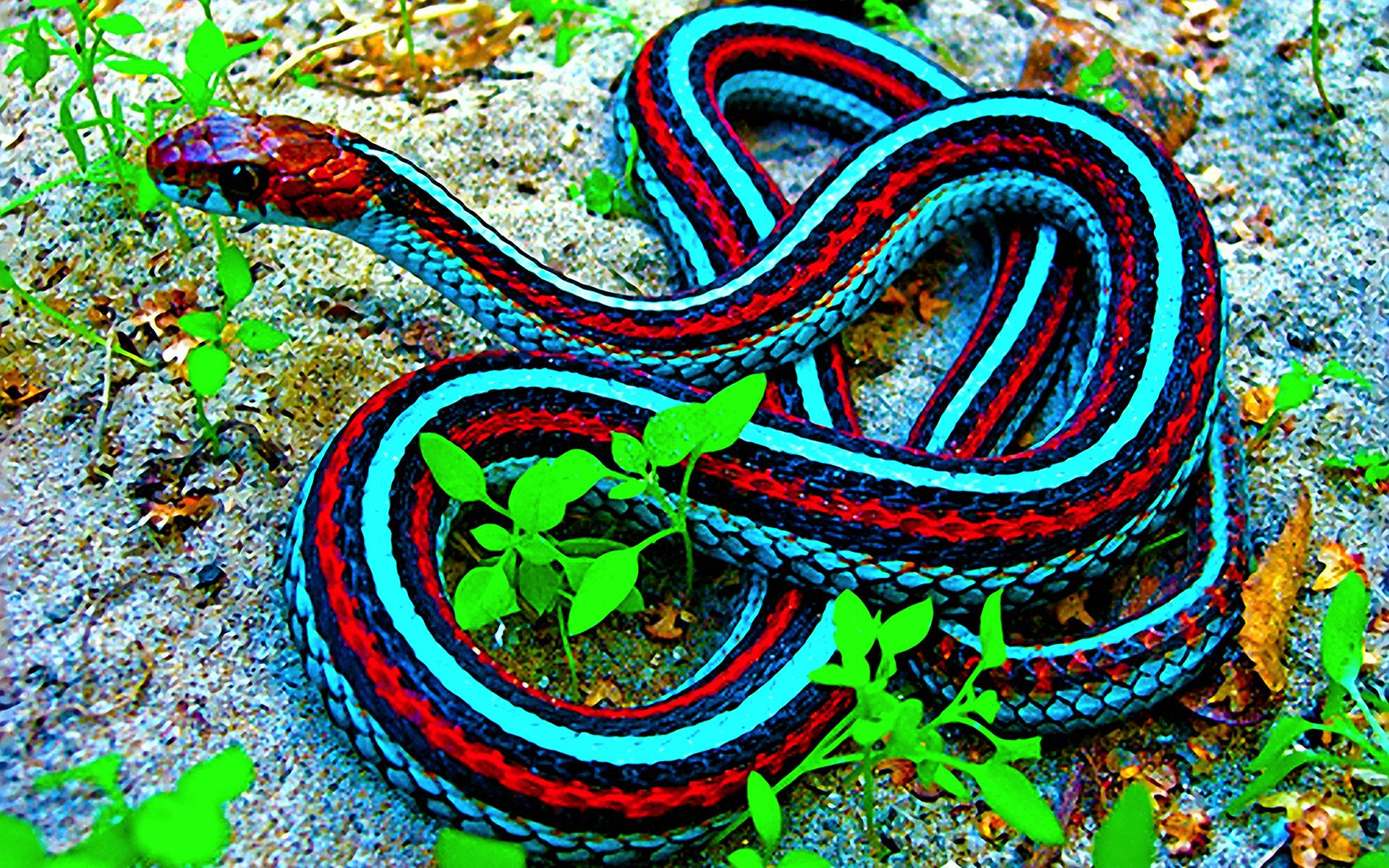 snakes images Snake HD wallpaper and background photos 40437514 1920x1200
