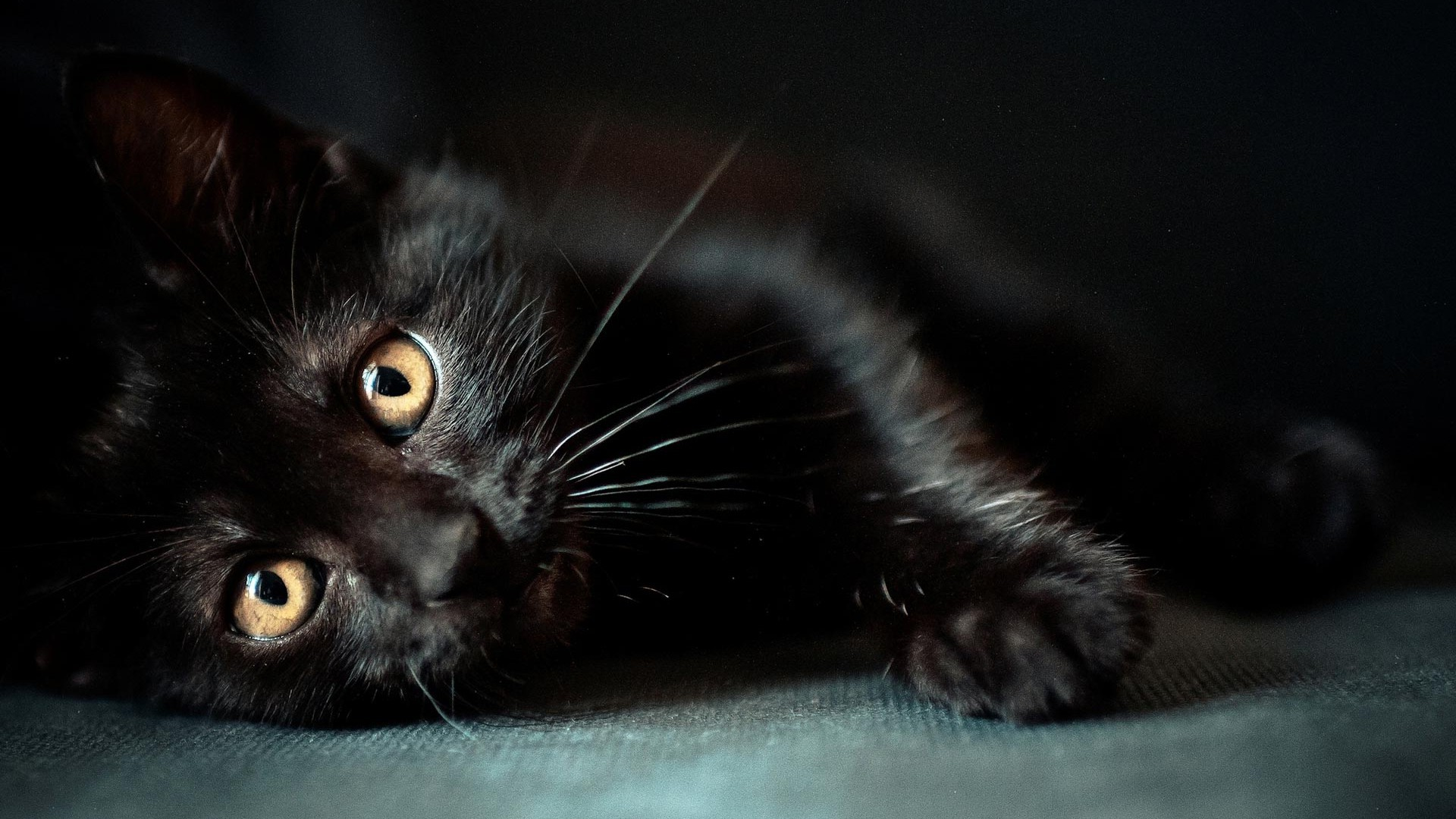 Cute Black Cat Wallpaper 2021 Cute Wallpapers 1920x1080