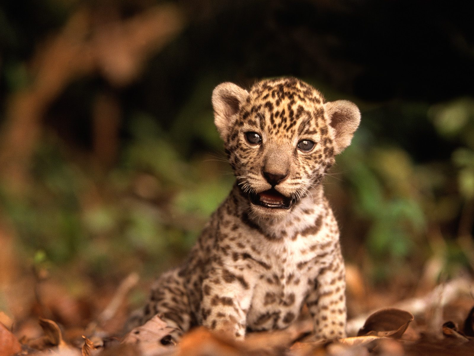 Baby Animal Wallpapers Baby Animal Pictures 1600x1200