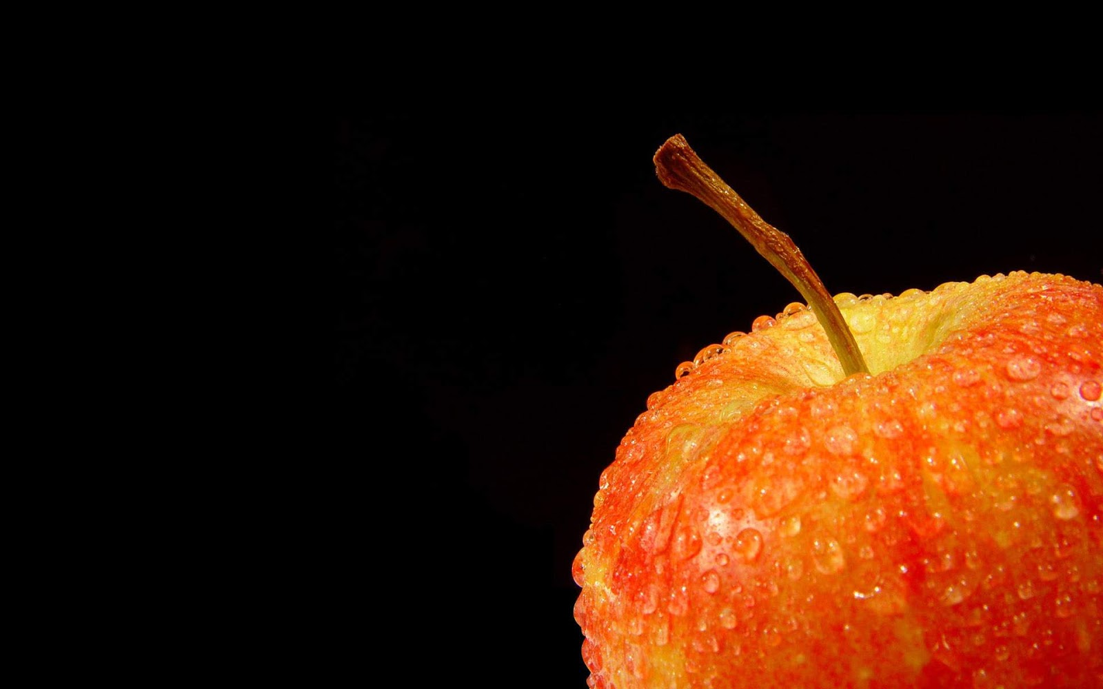 Wallpapers Orange Apple on Black Background Black Orange Wallpaper 1600x1000