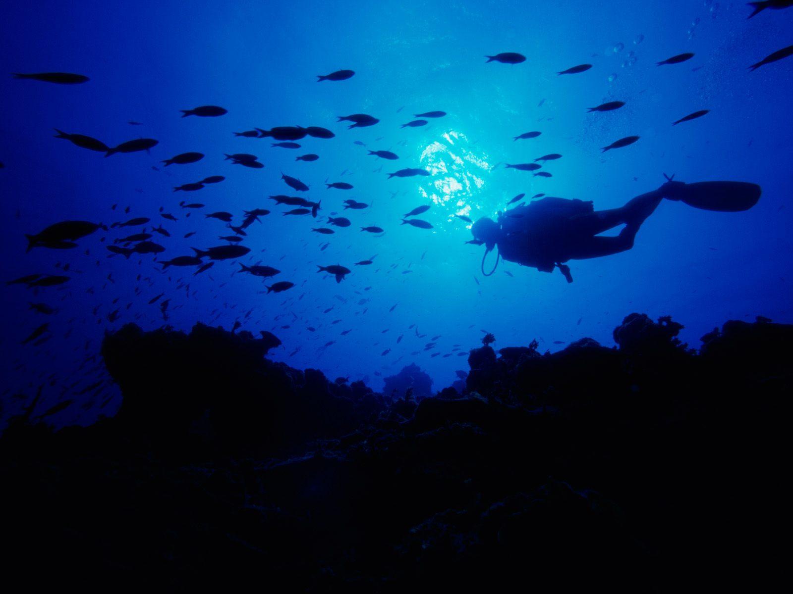 Blue Ocean Fish Animal HD Wallpaper Blue Ocean Fish Animal HD 1600x1200