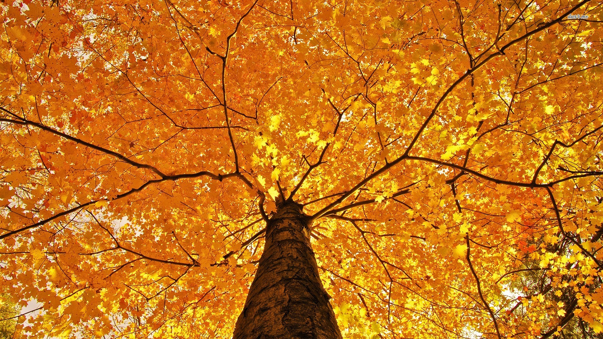 Fall Trees Photography Related Keywords amp Suggestions 1920x1080