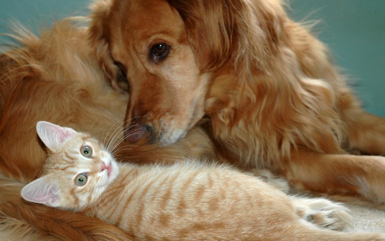 Dog and Cat Wallpaper   Teddybear64 Wallpaper 16835052 1280x800