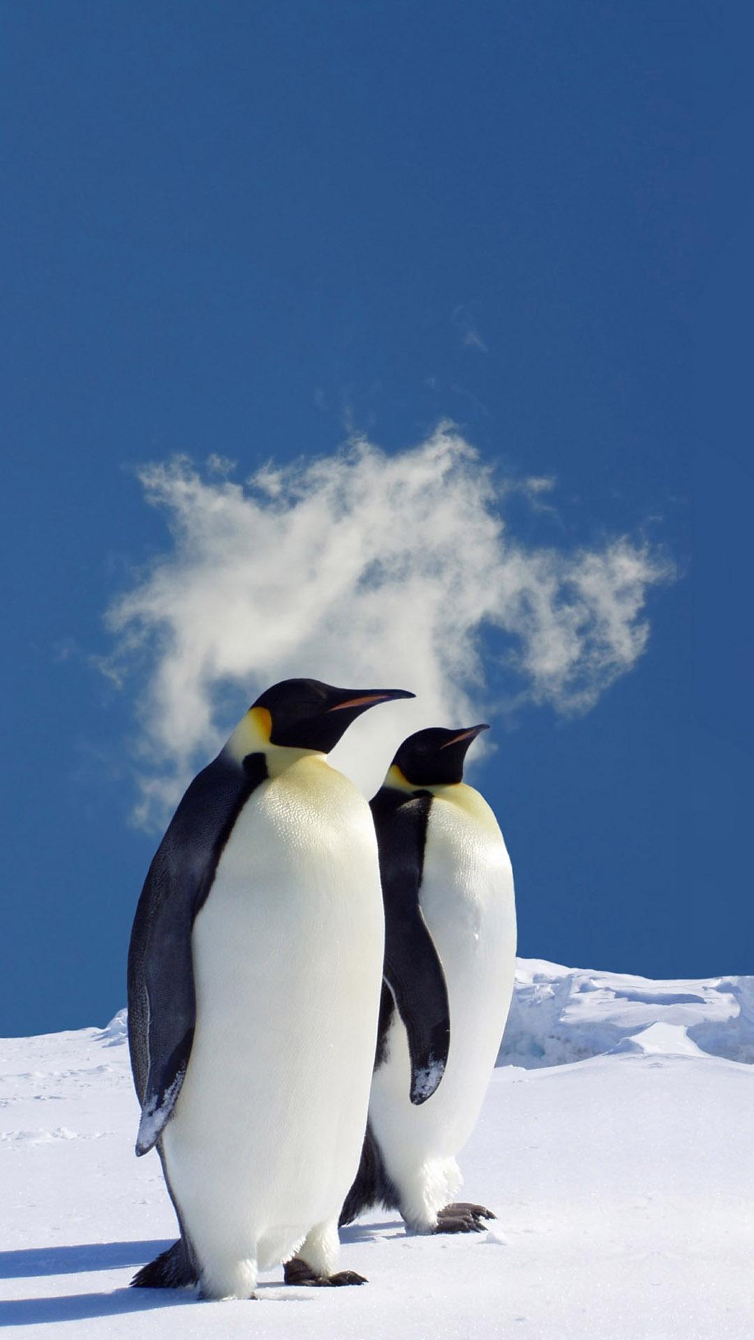 Penguin iPhone Wallpaper 1080x1920