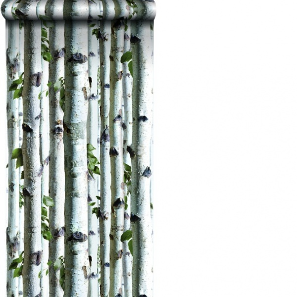 birch trees wallpaper exceptional wallpaper reproducing brilliantly a 600x600